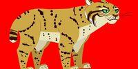 Bobcat (Wild Kratts)