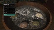 Turtle tub - zoo