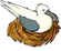 Pesky Gull (611)