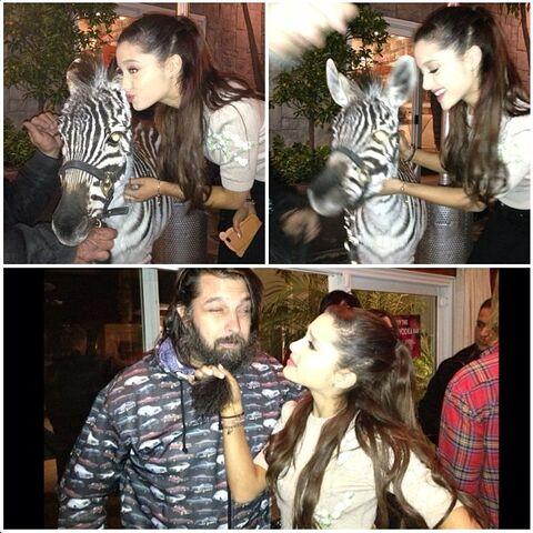 File:Ariana with a zebra and kooolkojak.jpg