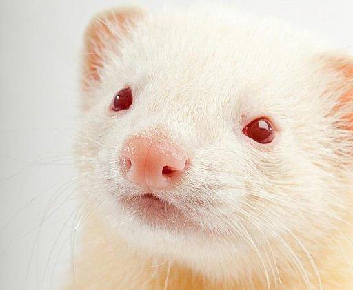 File:FERT-106 Face Albino.jpg