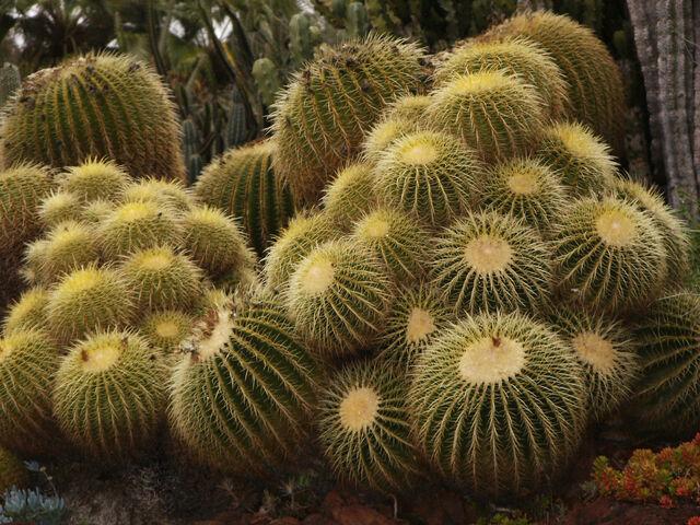 File:Cactus farm.jpg