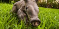 Unknown Aardvark