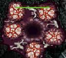File:Purge Nest.jpg