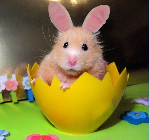 File:Hamster-bunny.jpg