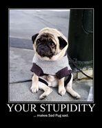 Motiv - stupidity sad pug