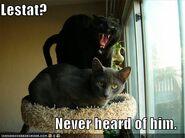 Lestat cat