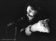 Jim morrison and lamb