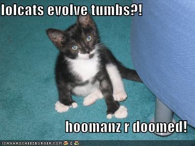 File:Lolcats evolve thumbs.jpg