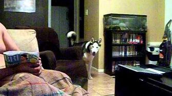 Dog afraid of Julia Roberts