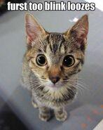 Staring contest kitten