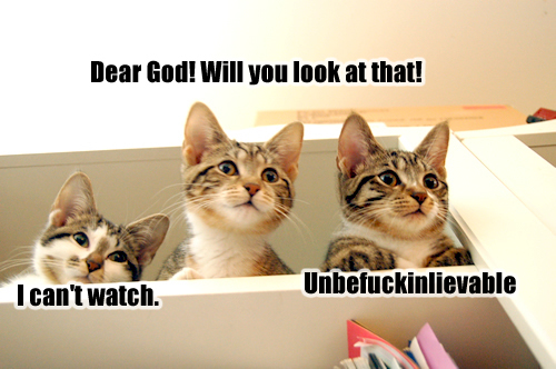 File:Shocked lolcats.jpg
