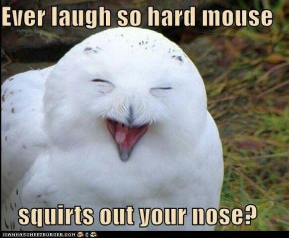 File:Laughing owl.jpg