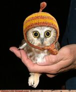Owl with a hat