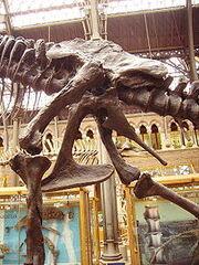 220px-Tyrannosaurus pelvis left