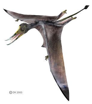 Rhamphorhynchus1