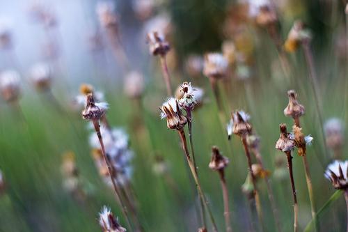 File:Cotton Buds.jpg