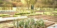 Growing and gardening UK