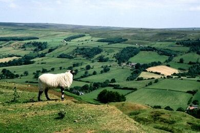 North York Moors1