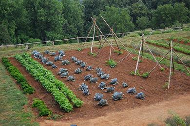 Vegetable garden, detail