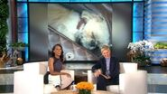 Kerry Washington on Her Adorable Dog