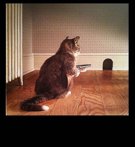 File:Cat-gun-mouse-hole.jpg