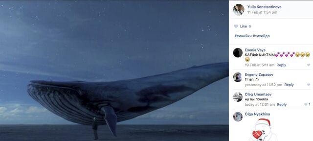 Datei:Blauer Wal 2.jpg