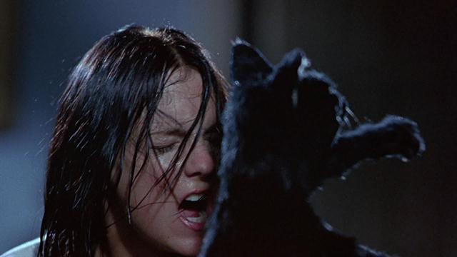 File:Cindy vs mr kittles.jpg