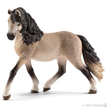 Andalusian Mare-0