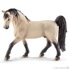 Tennesse Walker Stallion 2016