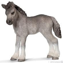 Fell Pony Foal