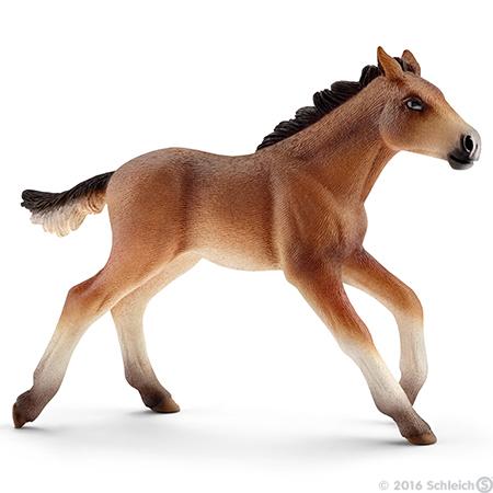 File:Mustang Foal.jpg