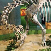 "Saltasaurus (""Salta lizard"")"