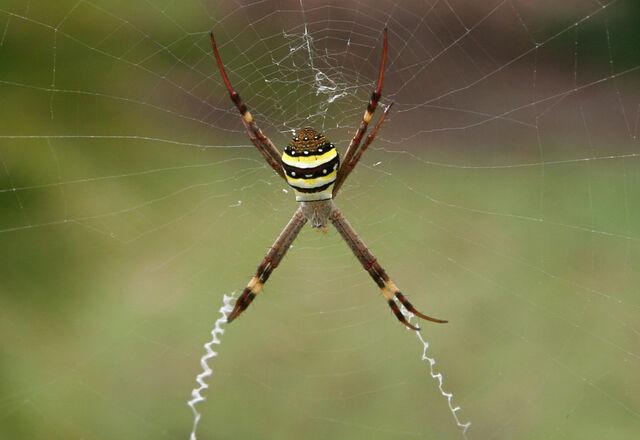 File:13. Spider (Lovers).jpg
