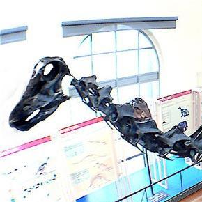 File:Diplodocus Cropped.jpg