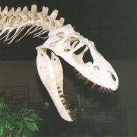 """Albertosaurus (""""Alberta lizard"""")"""