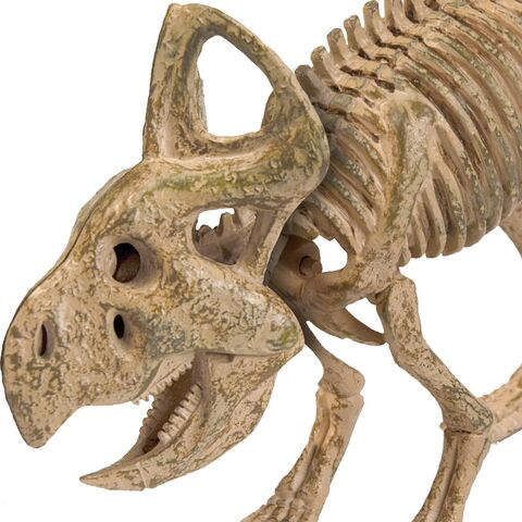 File:Protoceratops Skeleton Cropped.jpg