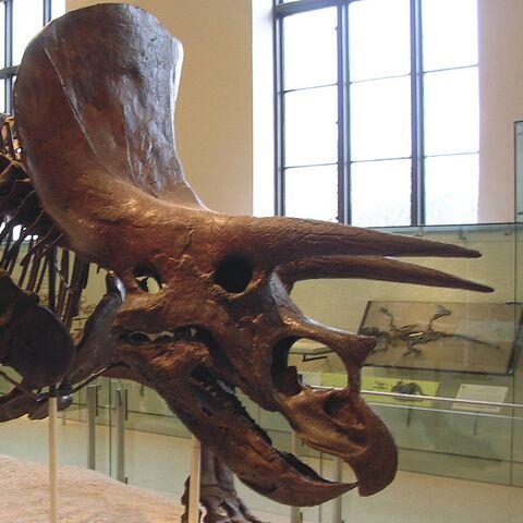 File:Triceeratops Skeleton Cropped.jpg
