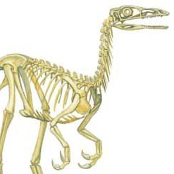 File:Compsognathus Cropped.jpg