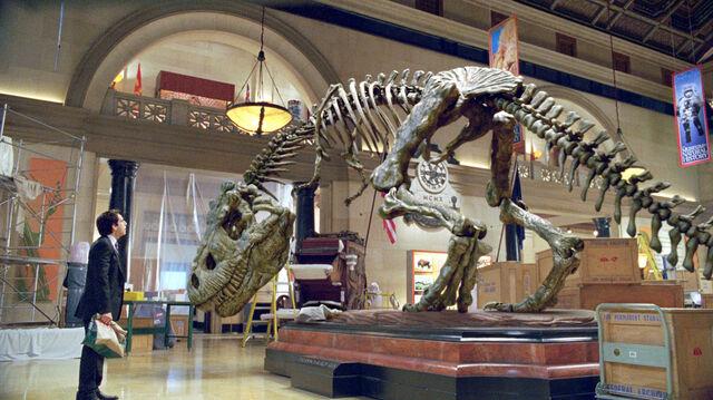 File:Rexy Skeleton.jpg