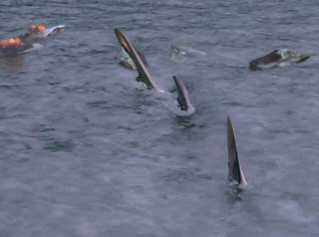File:Hammerhead Underwater.JPG