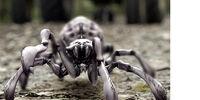 Spiders (Arachnoquake)