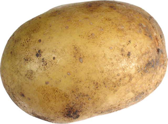 File:Potato PNG7078.png