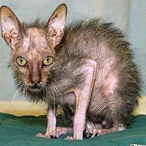 File:Ugly-cat-2.jpg