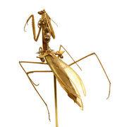 Clockwork mantise