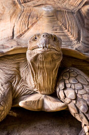 Wise Old Turtle
