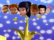 Fairies rumor