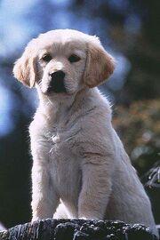 Napoleon The Cutest Puppy