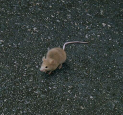 File:Sitting Louis Mouse.jpg