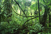 Episode 1 Jungle